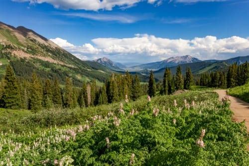 spring flowers - crested butte