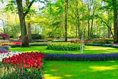 spring flowers - netherlands